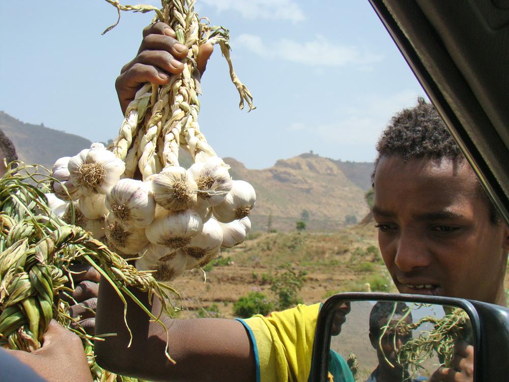 Calluna-Magazin: Alltag in Äthopien