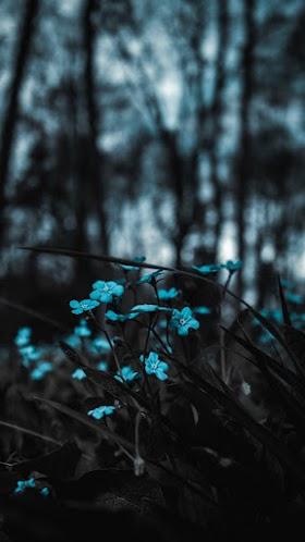 Bụi Hoa Rừng, Hoa Màu Xanh