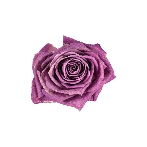 Significado de las rosas lilas
