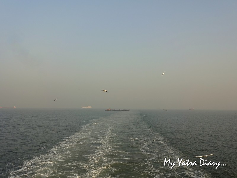 Seagulls swooping in air at the M2M Ro-Ro ferry Mumbai to  Alibagh