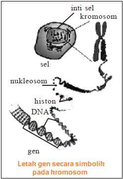 Jumlah Kromosom pada 40 Jenis Makhluk Hidup