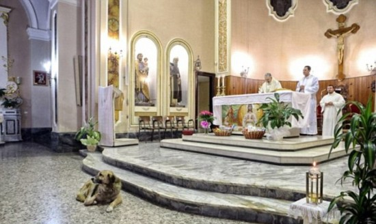 Ciccio Waiting for His Deceased Owner in Italy Each Day in Mass