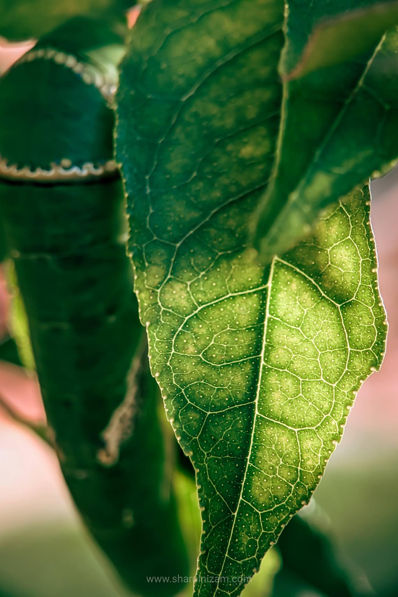 10 Gambar Macro Photography Di Halaman Rumah (Lensbong Nikon 35 mm & Samsung A52)