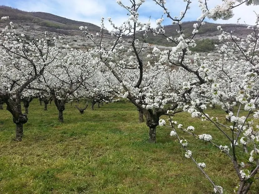 Jerte Valley Spain