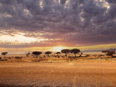 Trees in a desert stock image