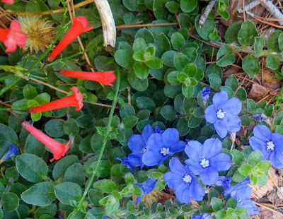 pretty blue and red flowers