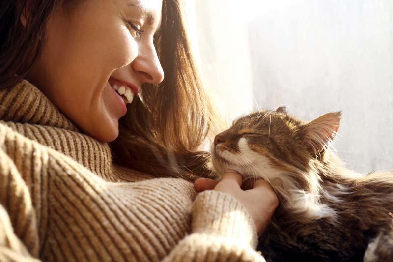 Four Reasons Why Your Cat Purrs
