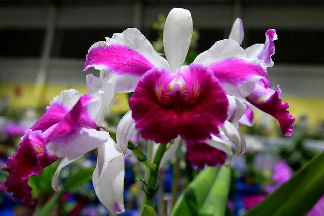 Cuidados com as Orquídeas