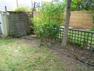 High Park Toronto Back Yard Fall Cleanup After by Paul Jung Gardening Services--a Toronto Organic Gardening Company