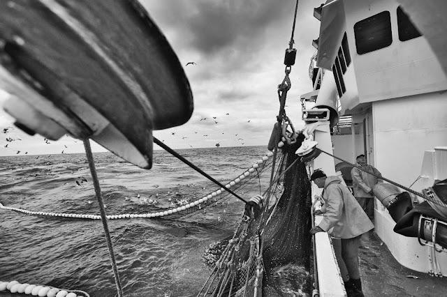 Matjes Fischkutter beim Fischfang
