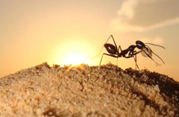 Semut dan Keledai pun Mengakui Allah Ada Di Atas Langit/ ARSY