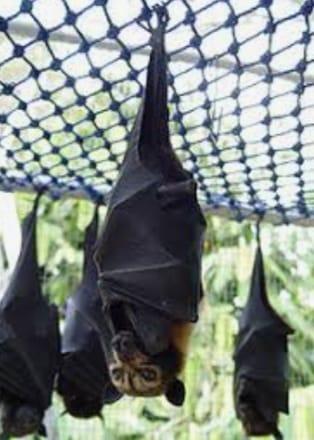 """تفشي فيروس جديد بالصين مصدره خفافيش الفاكهة.. و«الجارديان»: جائحة أخطر من """"كورونا"""" - كتبت. شيماء صبرى"""
