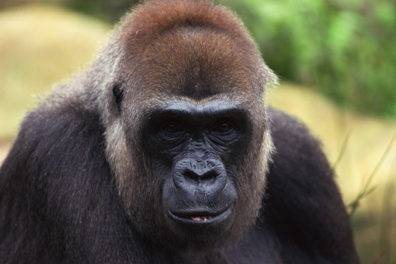 aap als beursanalist