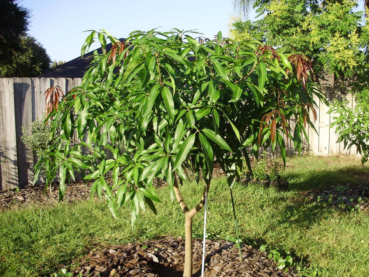 Yunita Penanaman Pohon Buah Buahan Di Kebun Ku