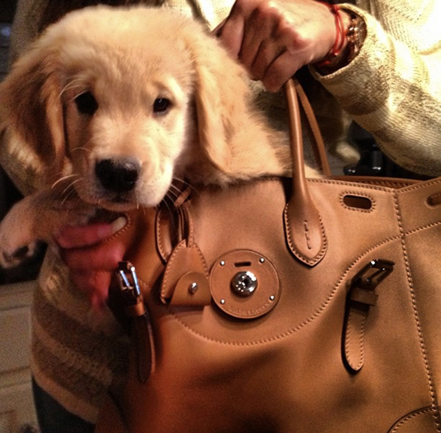 Golden Retrievers Ralph Lauren Ricky Bag