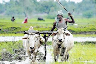 AP Annadatha Sukhibhava Phase -I Check Status  ప్రభుత్వం ప్రతిష్ఠాత్మకంగా చేపట్టిన అన్నదాత సుఖీభవ పధకం మొదటి విడత గా రైతులకు వారి ఖాతాలో 1000 రూపాయిలు జమ చేశారు వాటి వివరాలు