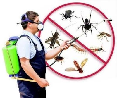 شركة رش مبيدات و مكافحة حشرات بشقراء مع الضمان