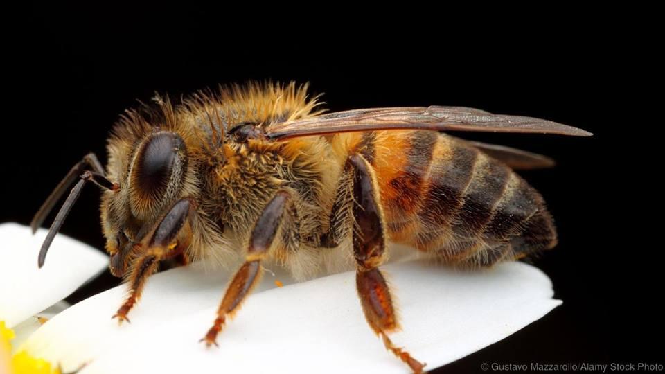 """Πρόσκληση για συμμετοχή σχολείων στο Ε.Θ.Δ. """"Μέλισσας έργα, ανθρώπων αγαθά"""""""