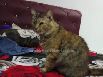 Koko dan Catnip versi Mrs. A