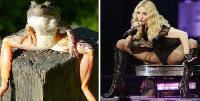 Madonna Mirip Hewan