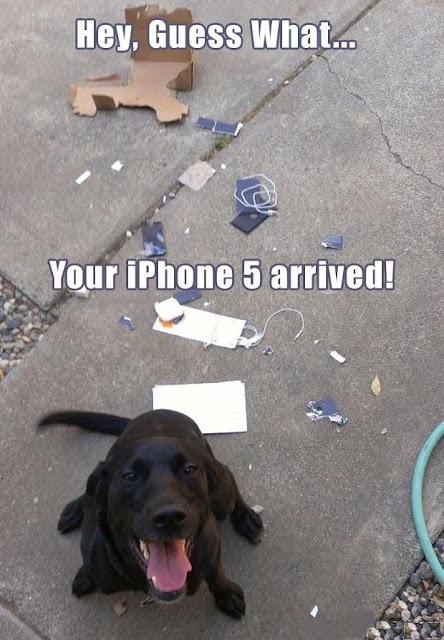 Hilarious Dog iPhone Arrived Caption Photo