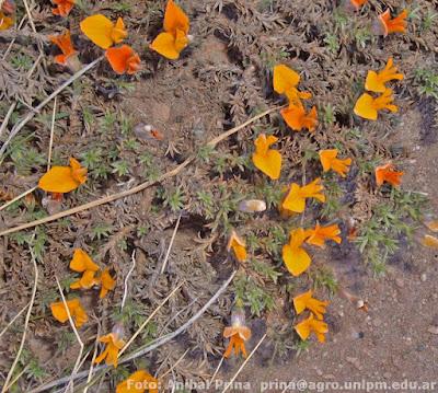 flora de los altos andes