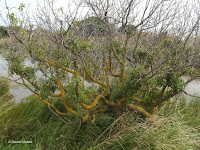 Moss-covered shrub, Kaikoura - South Island, New Zealand