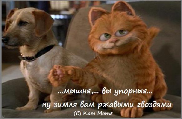 Блог Кота Моти  36oQ24--Rz8
