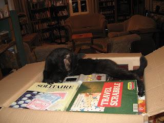 black cat sleeping in a box of board games