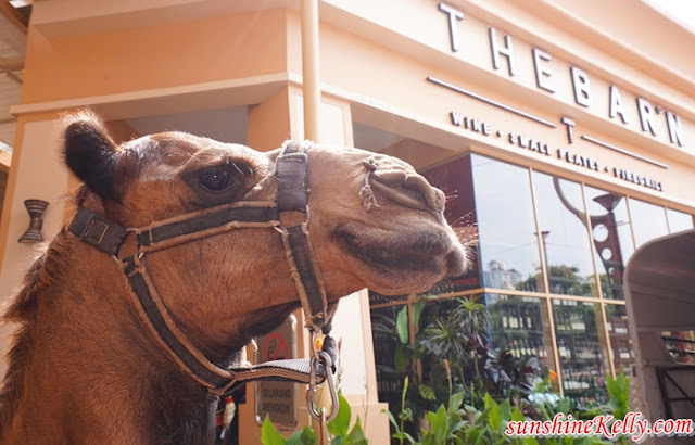 THE BARN, Sunway Pyramid, Barny the Camel, The Barn Wine Bar, Pavilion, 1 Mont Kiara, Gurney Plaza, Desa Park City, Food