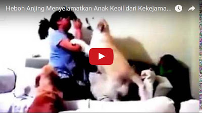 Anjing Pintar Penyelamat Anak Kecil