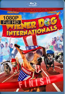 Wiener Dog Internationals (2017) [1080p Web-DL] [Latino-Inglés] [LaPipiotaHD]