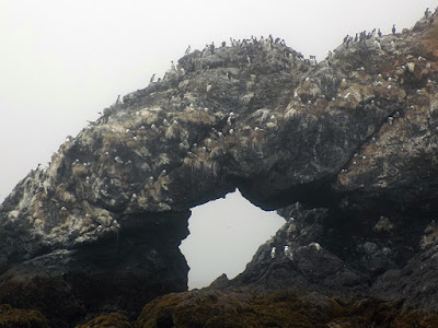 20,000 Seabirds Build Nests in The Rock Faces & Cliffs Of Gull Island.