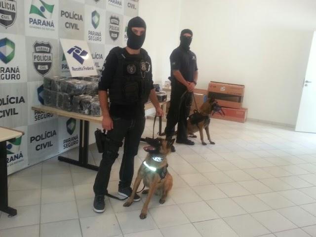 Cachorros policiais da Denarc já encontraram mais de 5 toneladas de drogas neste ano