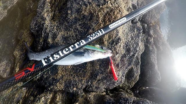 FISTERRA%2B2 - Primer robalo del otoño con Gudari 170-S spanish Ayu