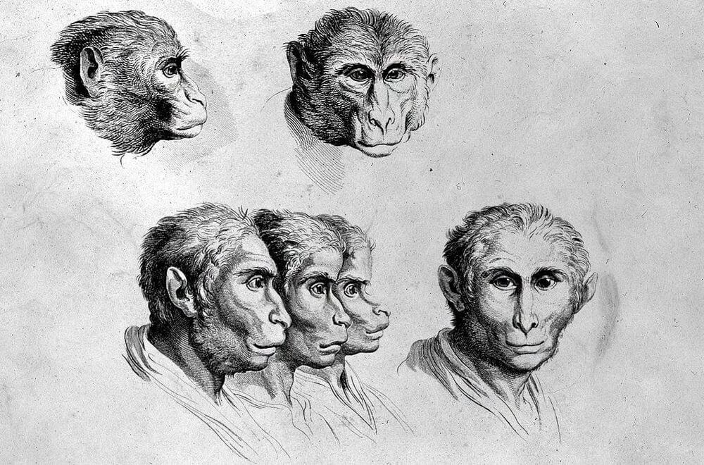 06-Monkey-Animal-Transformations-Drawings-from-the-1600s-www-designstack-co