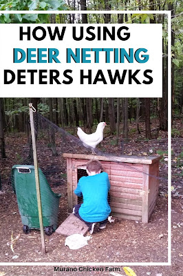 Deer netting over chicken run to keep hawks out.