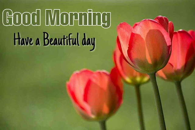 very nice good morning image with tulips flower have a nice day