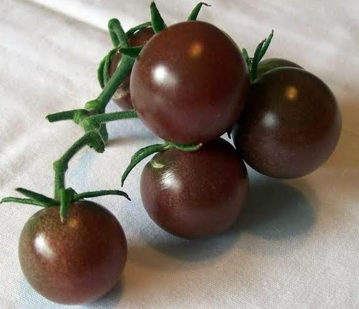 20 Biji Bibit Benih Tomat Hitam Black Cherry Tomato Tomat Ceri Hitam Sabang
