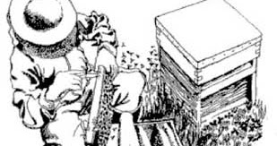 Strathcona Beekeepers: The Beekeepers' Library