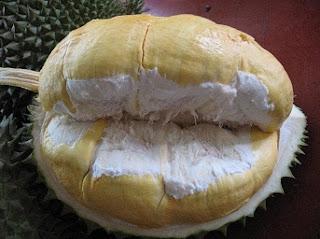 cara budidaya durian bawor,cara budidaya durian musang king,cara budidaya durian montong,cara budidaya durian agar cepat berbuah,cara budidaya durian unggul,cara budidaya durian merah,