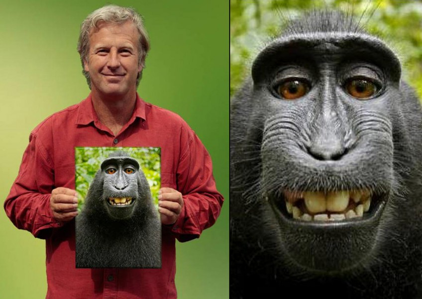 Wildlife photographer David J Slater and pictures of the monkey selfie