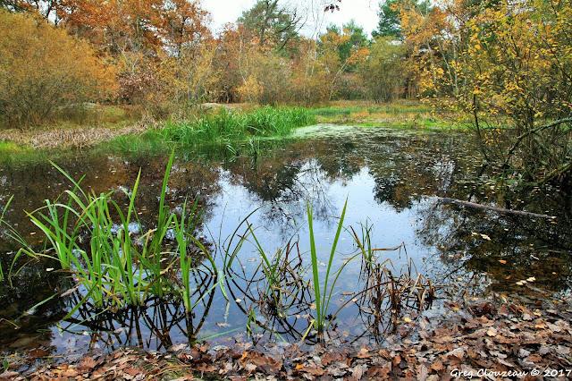 Mare aux fées , Forêt de Fontainebleau, Bourron-Marlotte