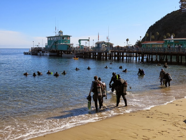 Divers entering at Green Pier