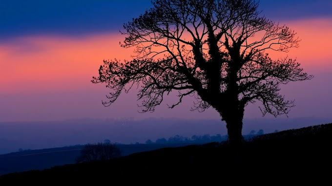 Plano de Fundo Celular Árvore Crepúsculo Pôr do Sol