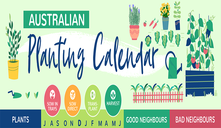What to plant when: garden calendar #infographic