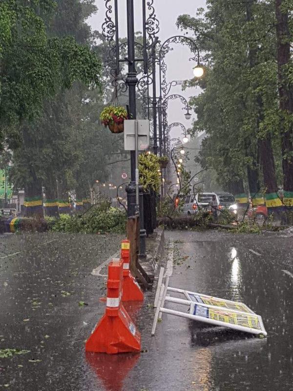 Hujan Angin dan Es Landa Bandung, Pohon tumbang di Jalan