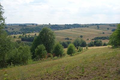 Roztoczańskie krajobrazy z Bukowej Góry: wąskie pola, gdzieniegdzie pojedyncze drzewa