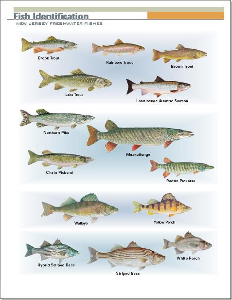 Freshwater fish list fresh water fish kenya 2017 fish for Aquarium fish list