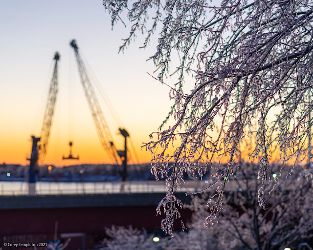 Portland Maine Usa photo by corey Templeton ice on trees in Harbor view park February 2021